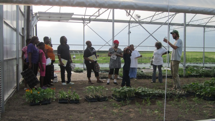 Gardeners picking up organic starter food plants from the greenhouse.