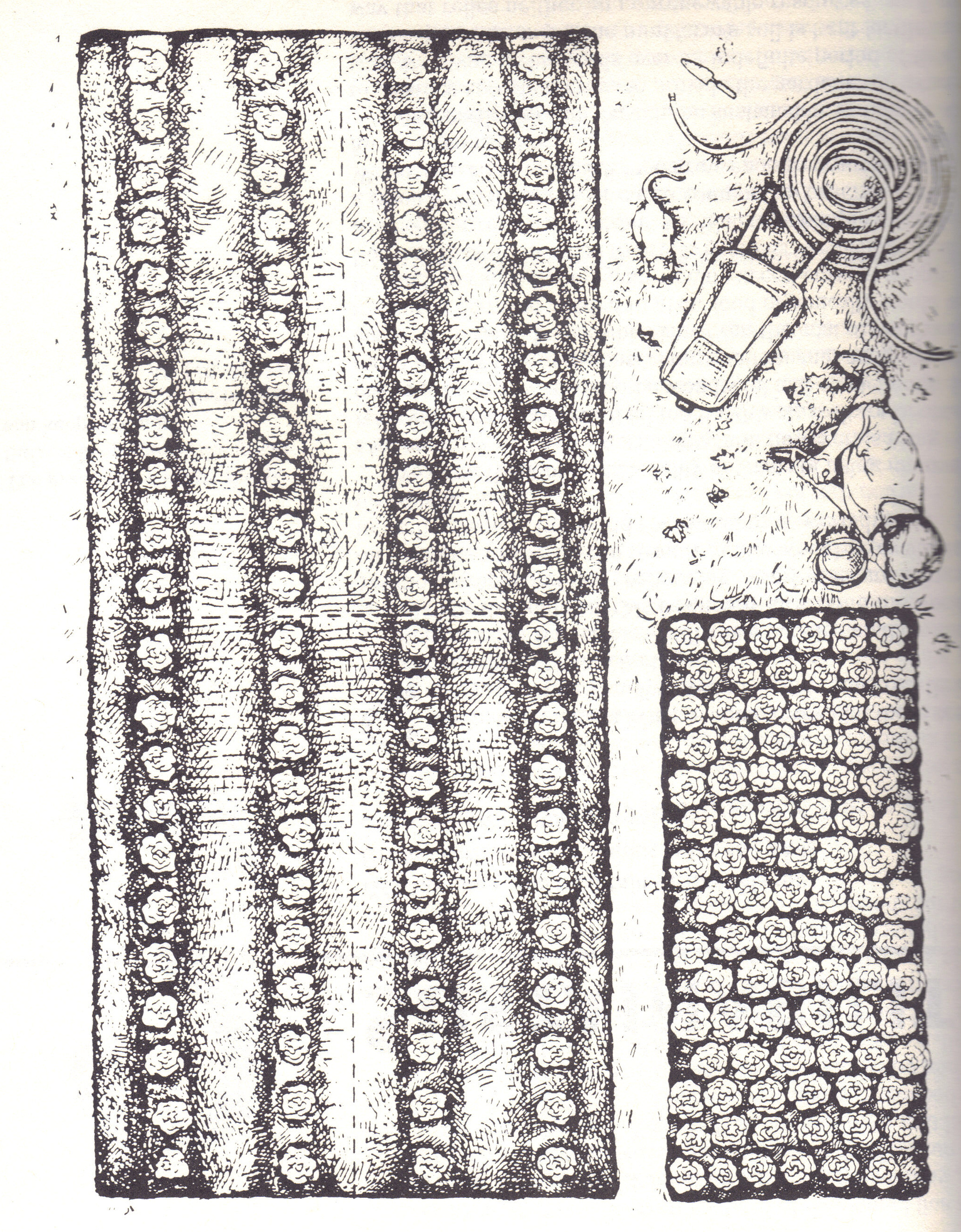 Biointensive Planting