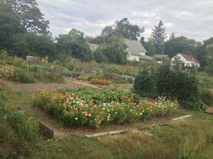 The Muskegon City Commission on has discussed the sales of produce from urban gardens. This garden is in the McLaughlin Neighborhood. (MLive/Dave Alexander)
